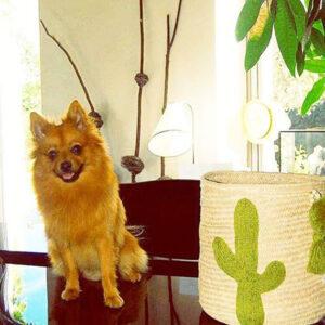 Corbeille Lyon cactus broderie